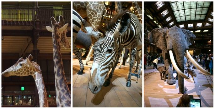 Museum National d'histoire Naturelle collage