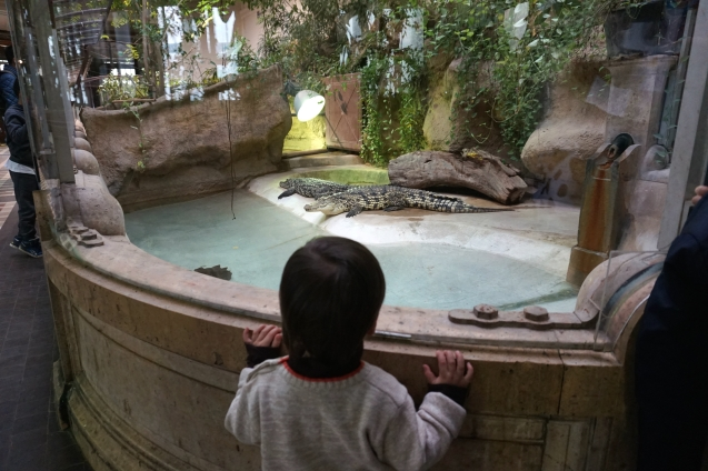 zoo - jardin des plantes 11