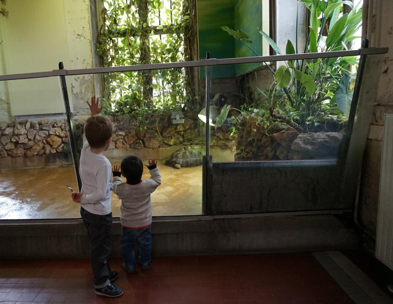 zoo - jardin des plantes 12