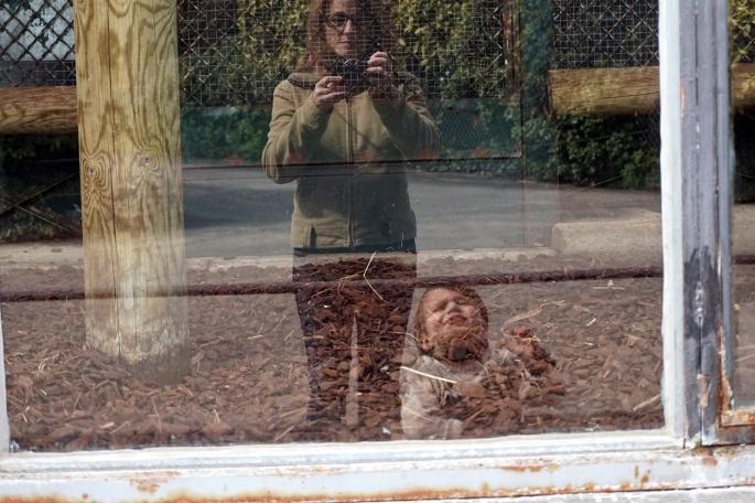 zoo - jardin des plantes 2