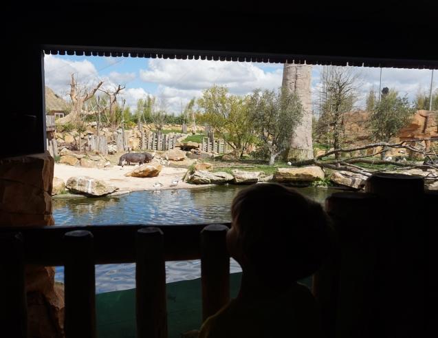ma petite tribu Zoo 13