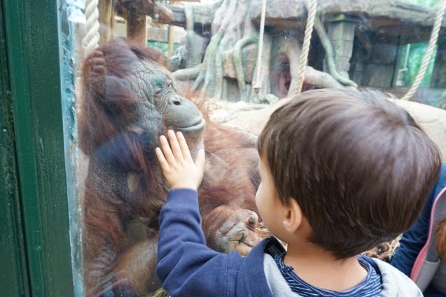 ma petite tribu Zoo 24