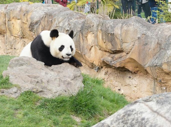 ma petite tribu Zoo 28