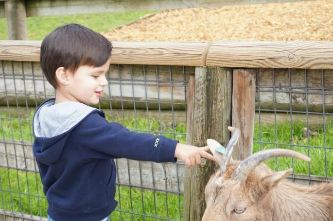 ma petite tribu Zoo 29