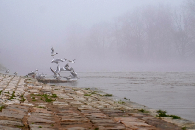 ma petite tribu Loire 3